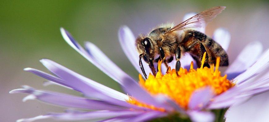 Opera Garnier Bees